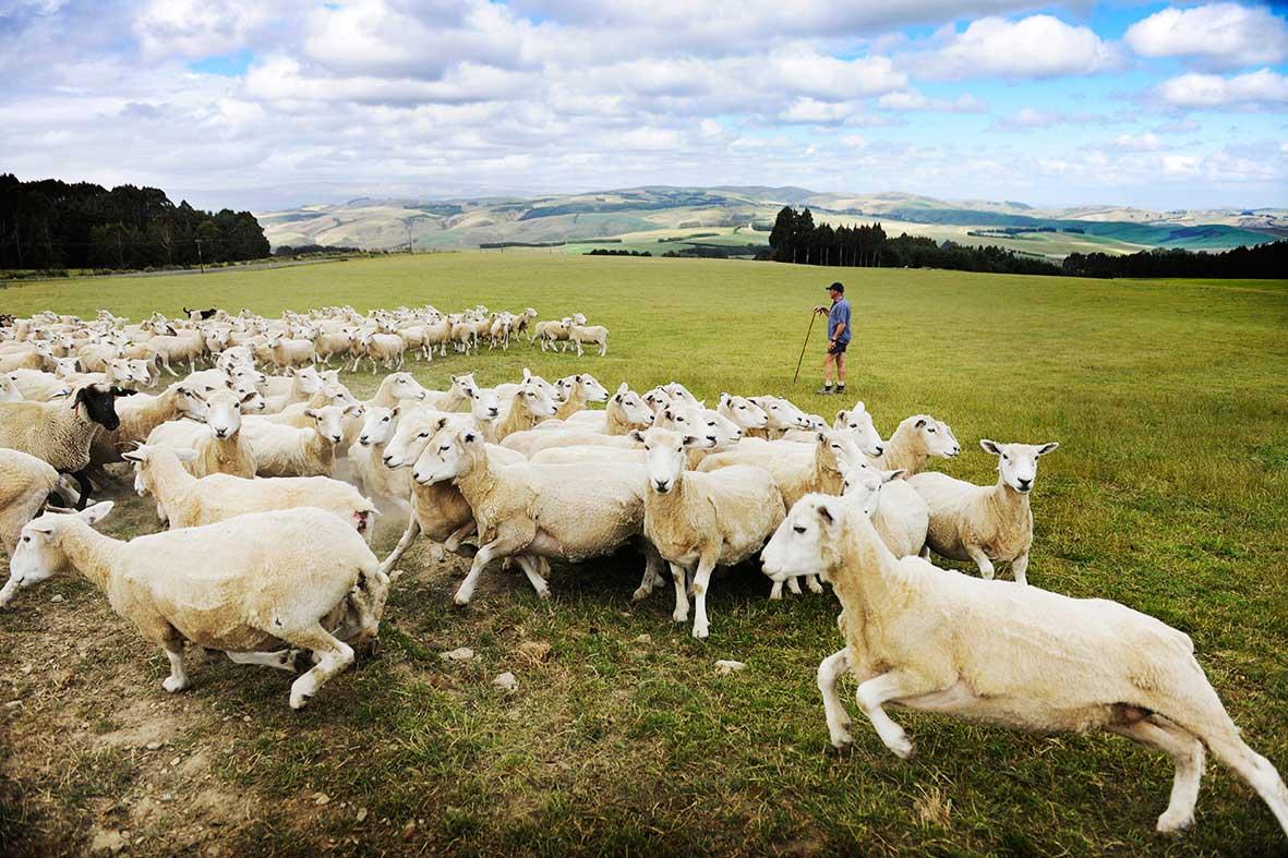 Lloyd Brenssell, Tapanui, New Zealand>2016