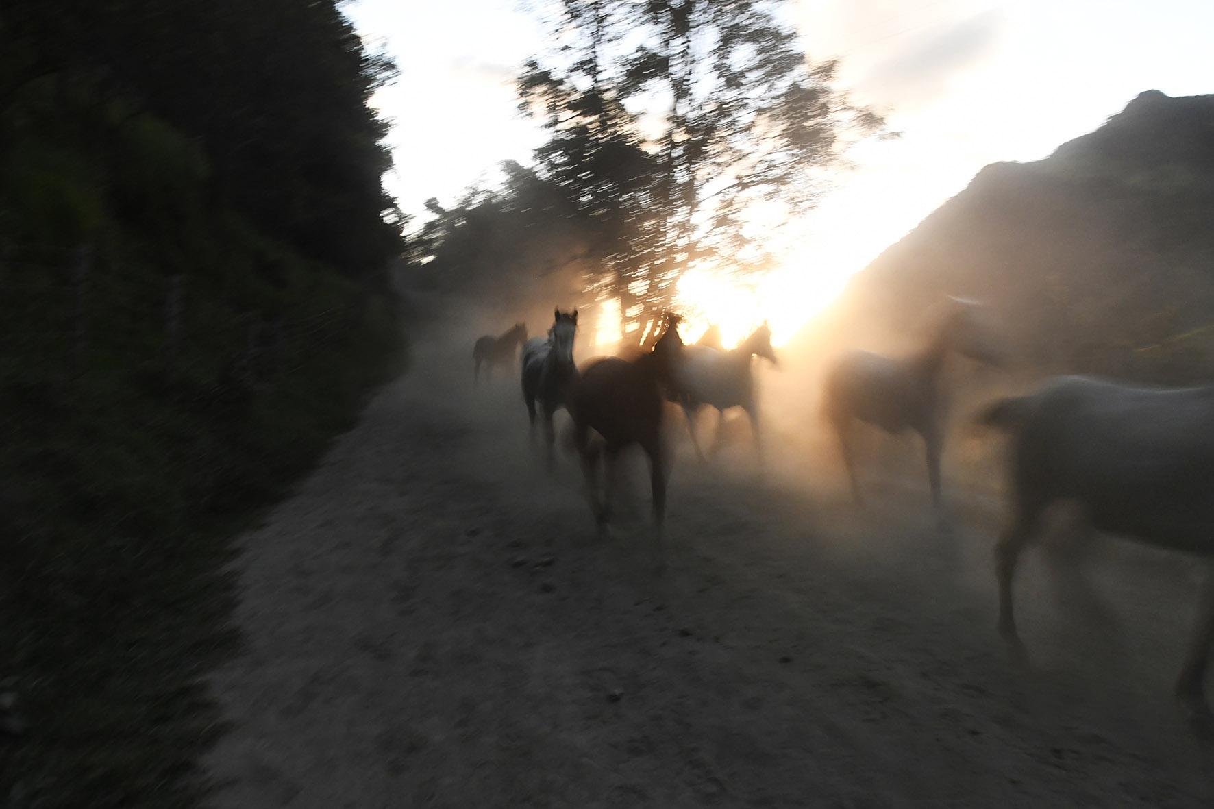 Valle de Cocora>2018
